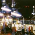 Nightshade, 1999,  oil on linen, 110 x 320cm